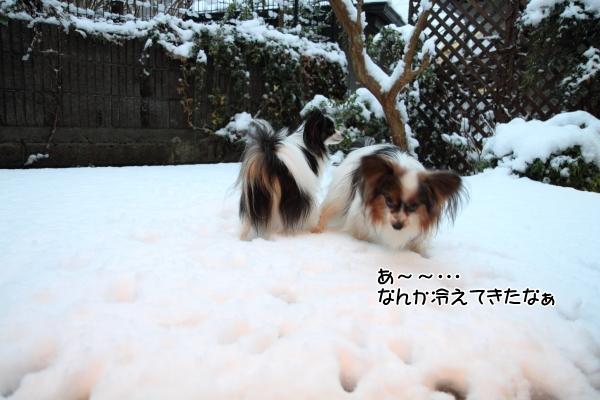 IMG_2663初雪2016初雪2016