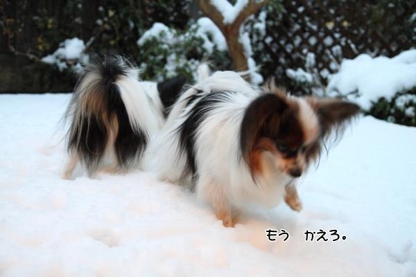 IMG_2664初雪2016初雪2016