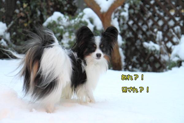 IMG_2666初雪2016初雪2016