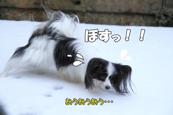 IMG_2676初雪2016初雪2016