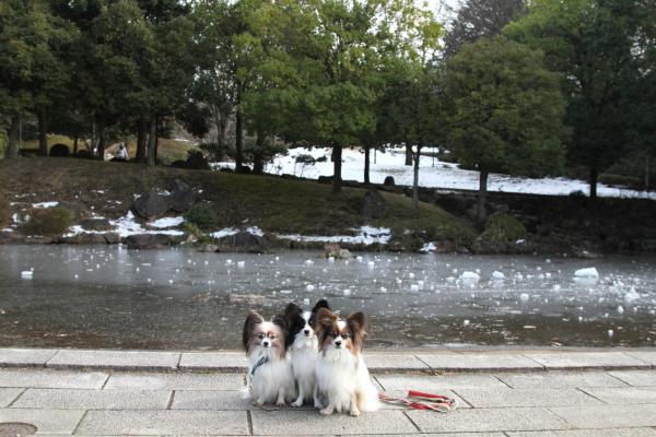 IMG_2745雪のふるさと公園雪のふるさと公園