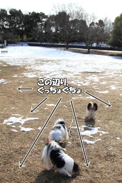 IMG_2683雪のふるさと公園雪のふるさと公園