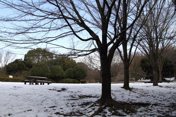 IMG_2733雪のふるさと公園雪のふるさと公園