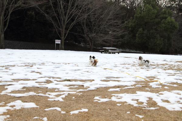 IMG_2690雪のふるさと公園雪のふるさと公園