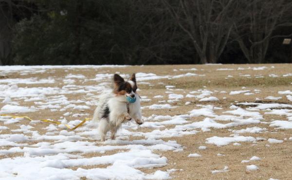 IMG_2710雪のふるさと公園雪のふるさと公園