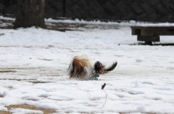 IMG_2719雪のふるさと公園雪のふるさと公園