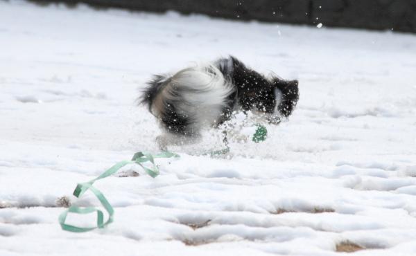 IMG_2723雪のふるさと公園雪のふるさと公園