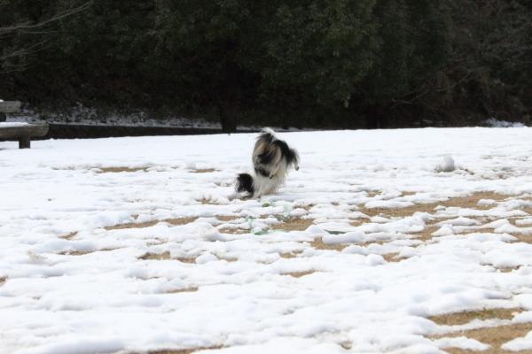 IMG_2704雪のふるさと公園雪のふるさと公園