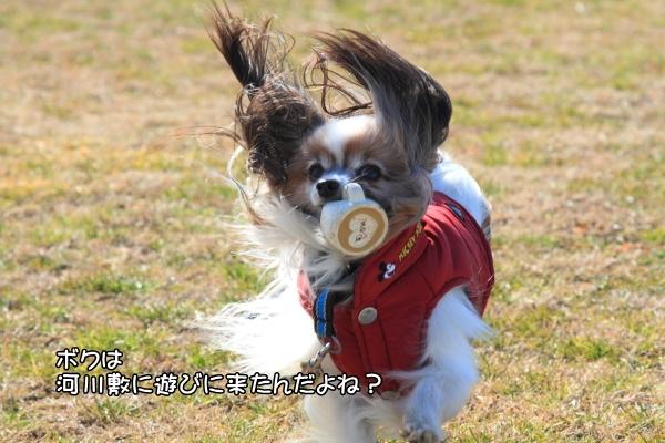 IMG_2764野田運動公園野田運動公園