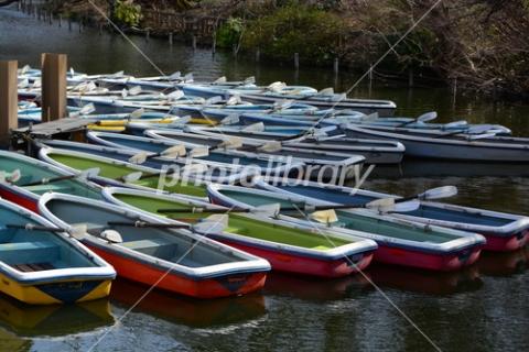 4210112 井の頭公園のボート