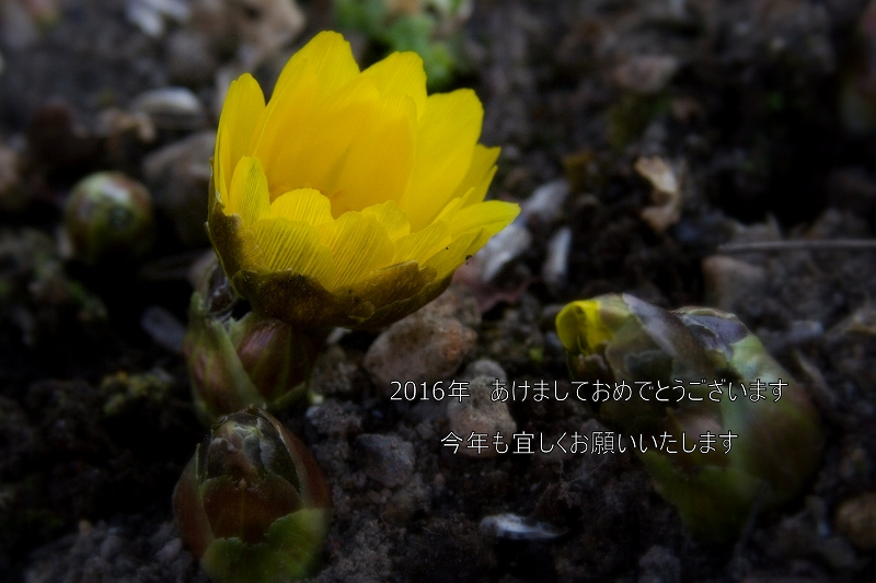 1-季節外れ_0005