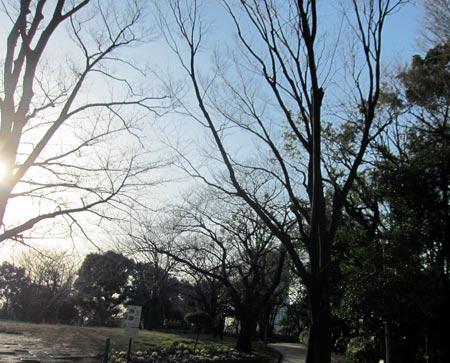 SAIGOU2016-1.jpg