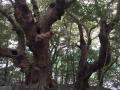 15_熊野ハイキング
