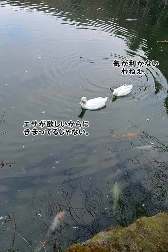 DSC_3917.jpg