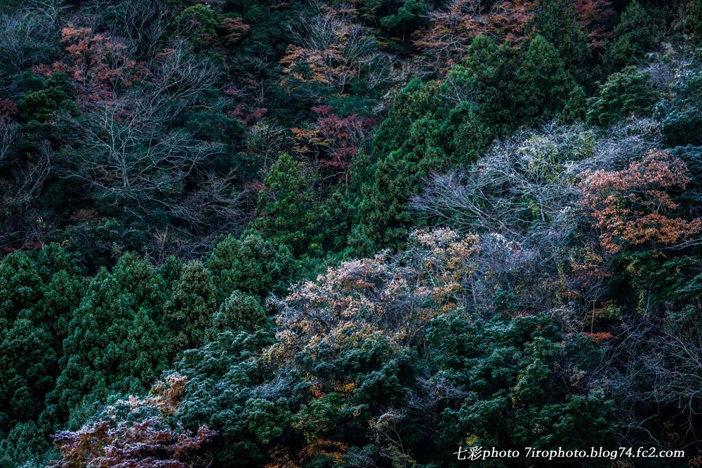 2014-12-07_千葉紅葉2_0018_edited-1