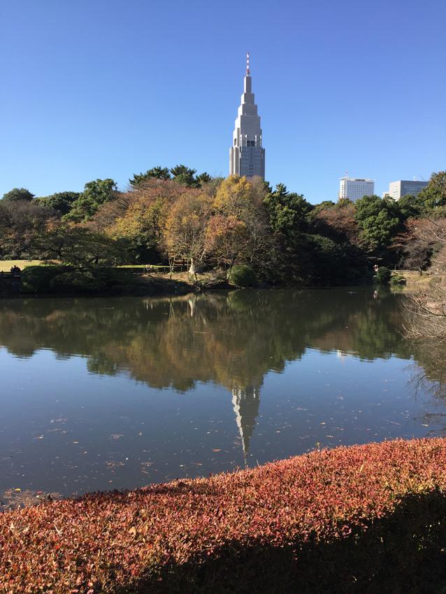 新宿御苑2015秋 (5)