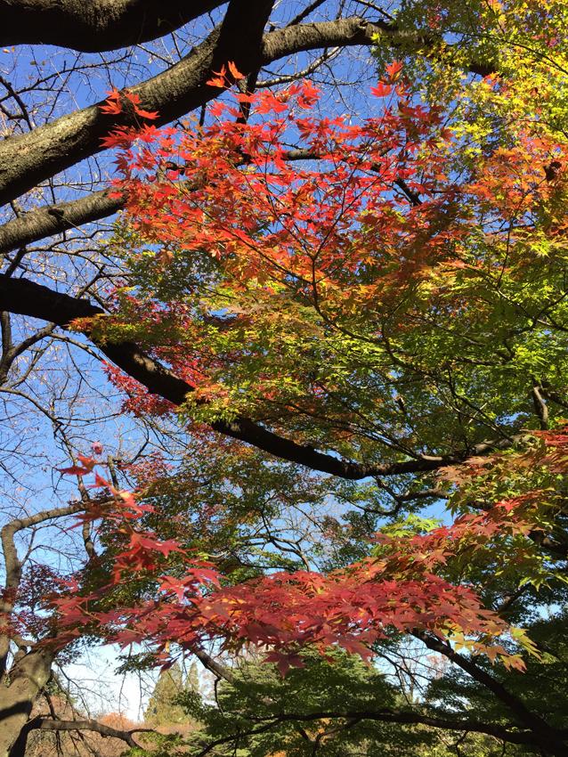新宿御苑2015秋 (6)