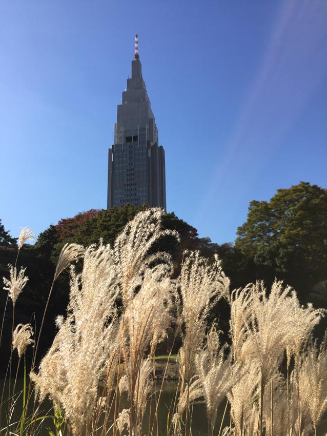 新宿御苑2015秋 (7)