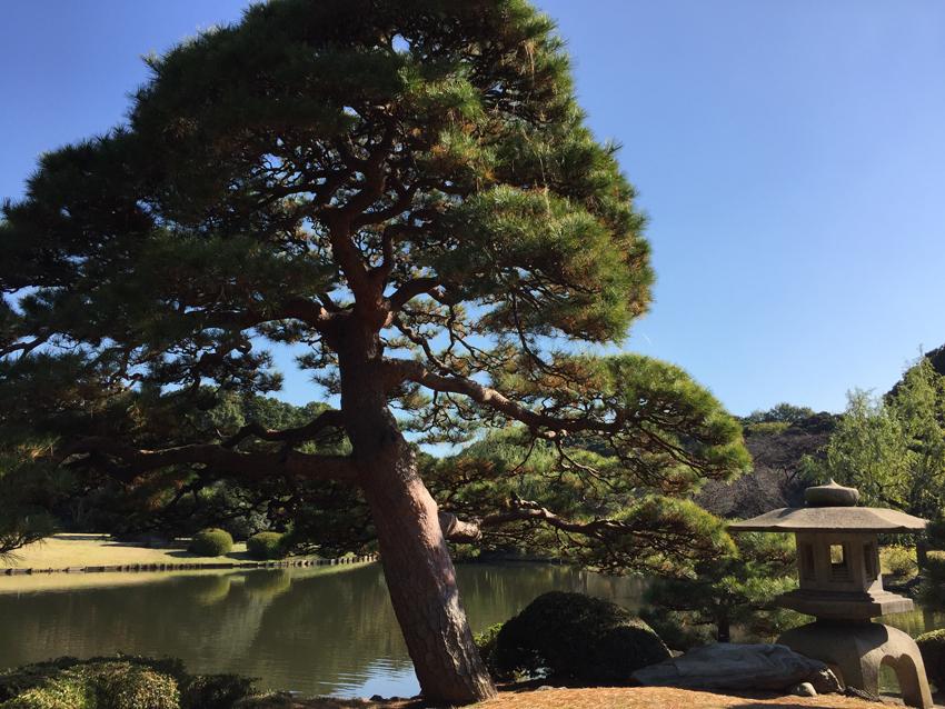 新宿御苑2015秋 (8)