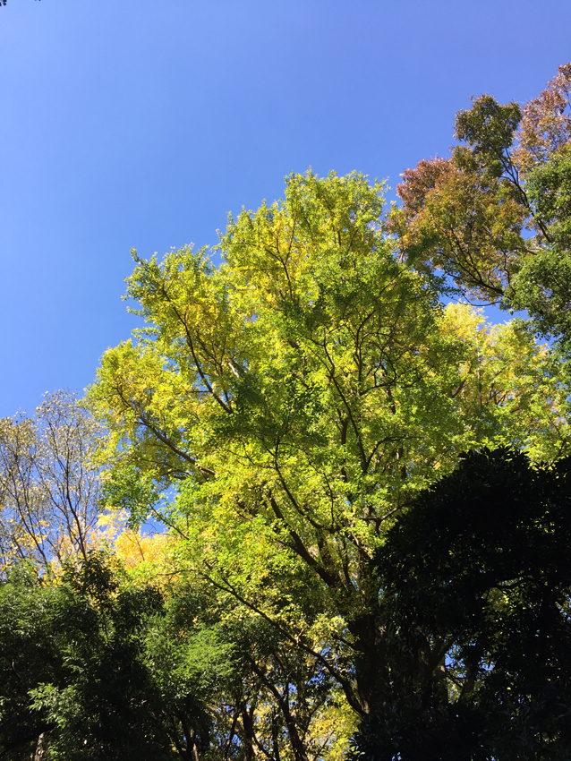 新宿御苑2015秋 (9)