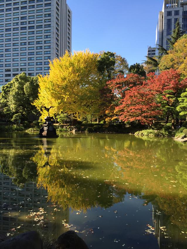日比谷公園2015秋 (2)