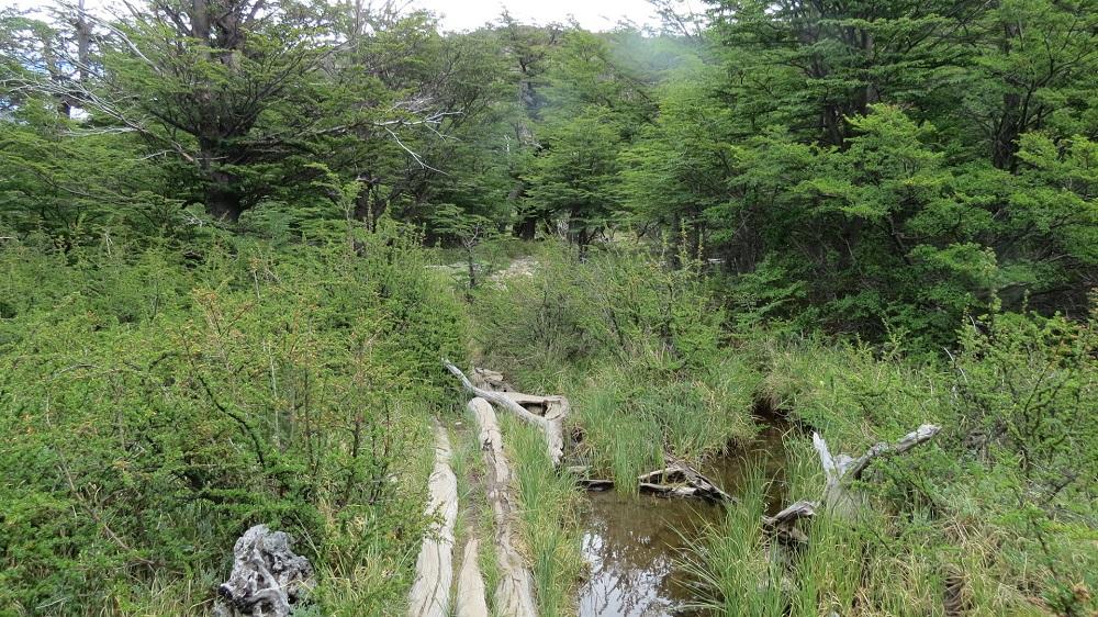 5林をIMG_8151