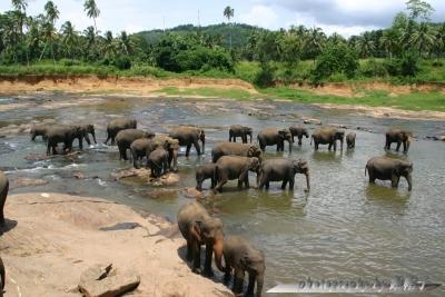 201407Sli-elephants.jpg