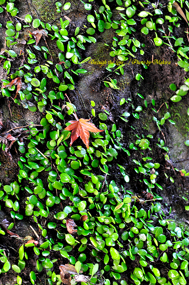 苔と落ち葉1