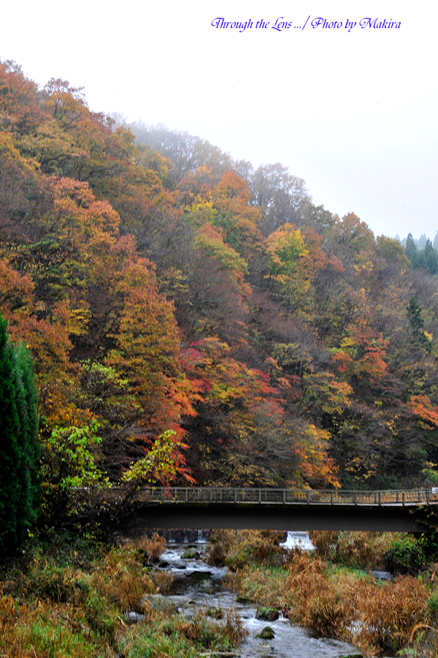 花園神社への紅葉1
