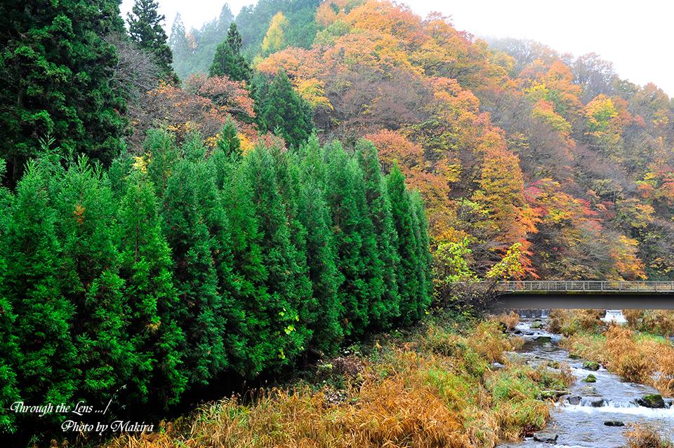 花園神社への紅葉2