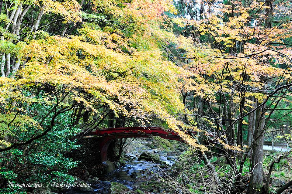 黄葉と神橋1