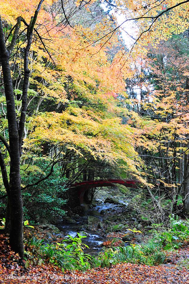 黄葉と神橋2