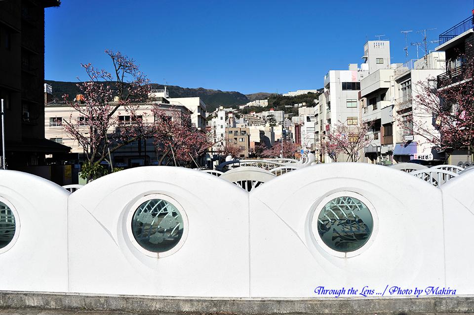 糸川熱海桜1
