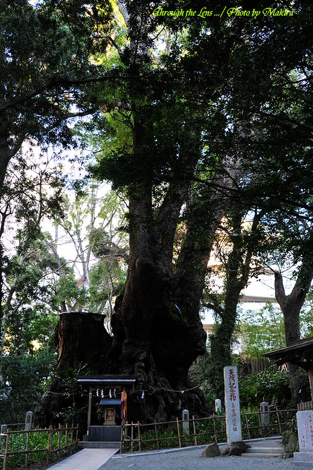 来宮神社9