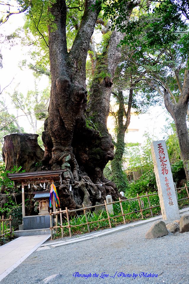 来宮神社11