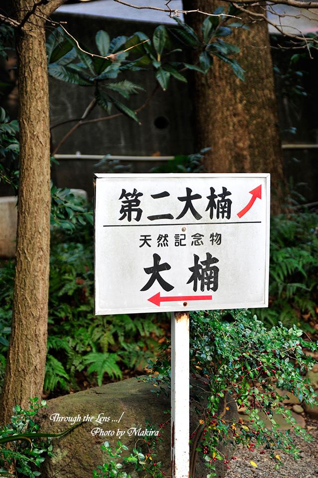 来宮神社13