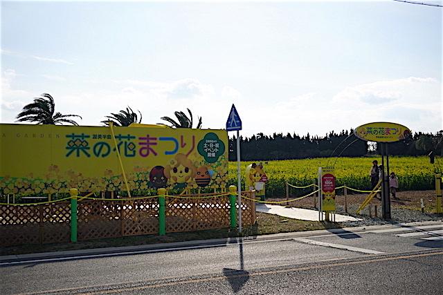 0110菜の花