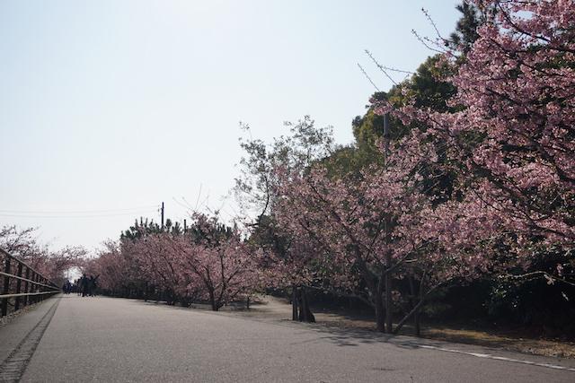 0227桜1−1