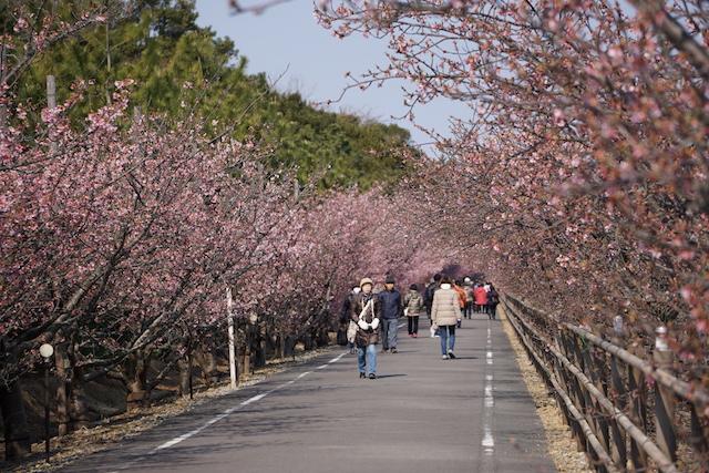 0227桜1