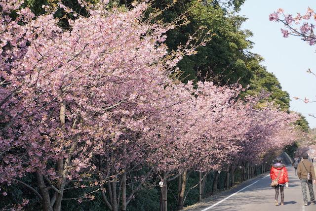 0227桜1−3