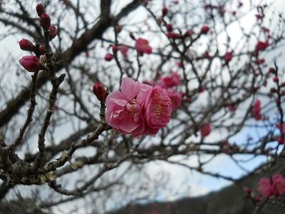 0124_花木園_梅 (2)