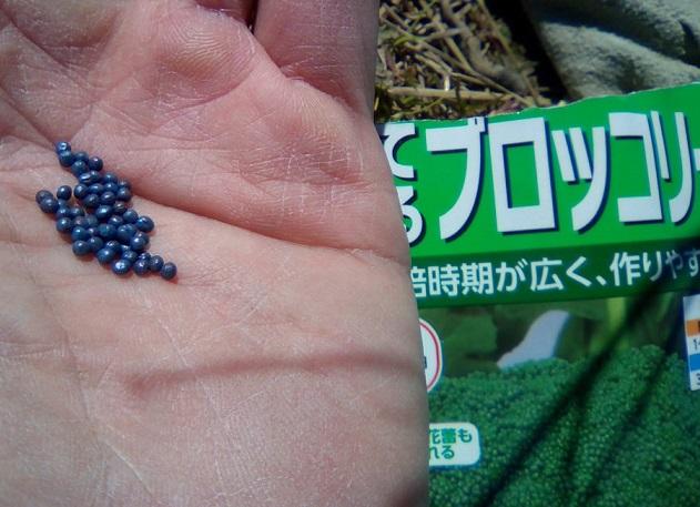ブロッコリー種