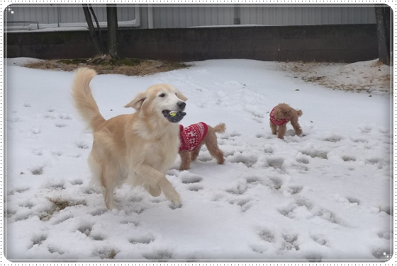 2016,1,14雪6