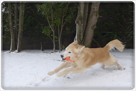 2016,1,21雪5
