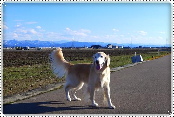 2016,2,8お散歩4