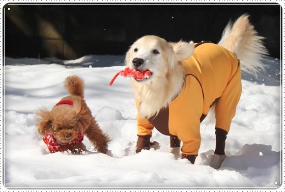 2016,2,18雪遊び12