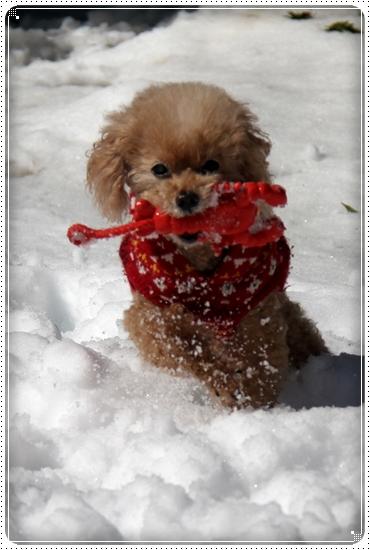 2016,2,18雪遊び9