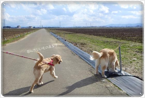 2016,2,21お散歩11