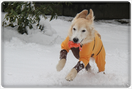 2016,2,26雪5
