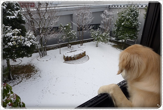 2016,3,2雪遊び1